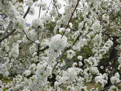 Primavera del 2006